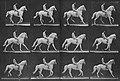Muybridge, Eadweard - Clinton mit Reiter (0.56 Sekunden) (Zeno Fotografie).jpg