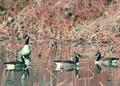 NRCSMD80009 - Maryland (4497)(NRCS Photo Gallery).tif