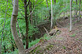 NSGOÖ 071 Hangwald Puckinger Leiten Weg.jpg