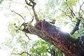 Nara sunlight and tree.jpg