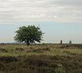 Nationaal Park Drents-Friese Wold. Locatie Fochteloërveen 02.JPG
