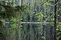Nationalpark Schwarzwald Wildsee-12.jpg