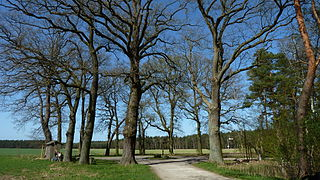 Naturdenkmal 14 Eichen am Großen Stern (ND-H60).JPG