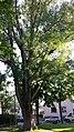 Naturdenkmal 788 sl2.jpg