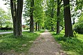 Naturdenkmal Lindenallee in Lößnitz Erzgebirge 2H1A2972WI.jpg
