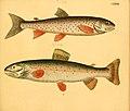 Naturgeschichte in Bildern mit erläuterndem Text (Taf. CXXVII) (6059228548).jpg