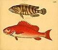 Naturgeschichte in Bildern mit erläuterndem Text (Taf. LXXV) (6059217124).jpg