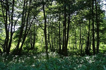 """Naturschutzgebiet """"Unterm Siegel bei Bebra"""" (3).jpg"""