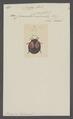 Neda - Print - Iconographia Zoologica - Special Collections University of Amsterdam - UBAINV0274 037 12 0003.tif