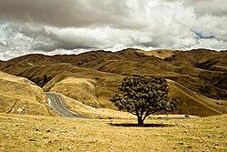 Nelson, New Zealand (Unsplash 7qg7DpbrYfI).jpg