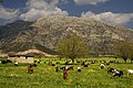 Nestani-Saga-Polje Arcadia Greece.jpg