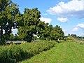 Neubeeren - Feldrand - geo.hlipp.de - 41193.jpg