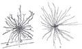 Neuroglia.png