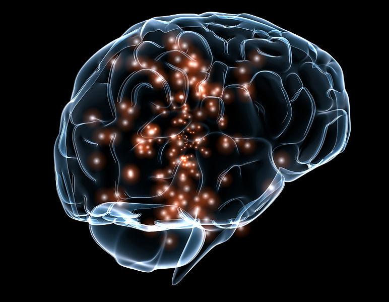 File:Neuronal activity DARPA.jpg