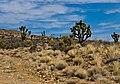 Nevada (5807449820).jpg