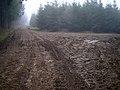 Newfarm Plantation - geograph.org.uk - 341554.jpg