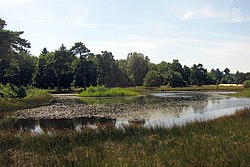 Nice ponds at NP Hoge Veluwe at 3 August 2015 in full flowerbeauty - panoramio.jpg