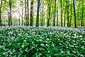 Nordkirchen, Naturschutzgebiet Ichterloh -- 2018 -- 2296-8.jpg