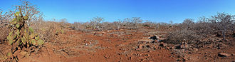 North Seymour Island - Vegetation and terrain in the dry season