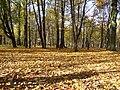 Oak park autumn.JPG