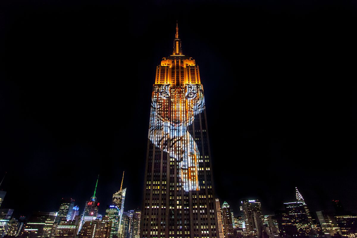 Image Result For The Empire State Building Halloween