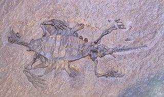 <i>Odontochelys</i> Extinct genus of reptiles