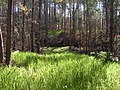 Off-Site Septic Systems (22) (5097730694).jpg
