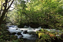 Oirase Stream 川(かわ).jpg