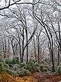 Oklahoma Ice Storm - panoramio.jpg