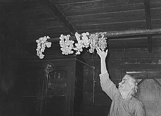 Cajun cuisine - Cajun woman reaching for strings of garlic suspended from rafters. Near Crowley, Louisiana, 1938.