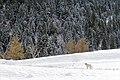 Olli - Andalo (TN) Italia - 28 Dicembre 2014 - panoramio.jpg