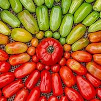Dégradé de tomates. (définition réelle 3130×3130)