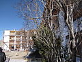 Oriental Guest House, Leh 07 (Friar's Balsam Flickr).jpg