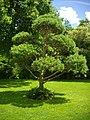 Orléans - jardin des plantes (11).jpg