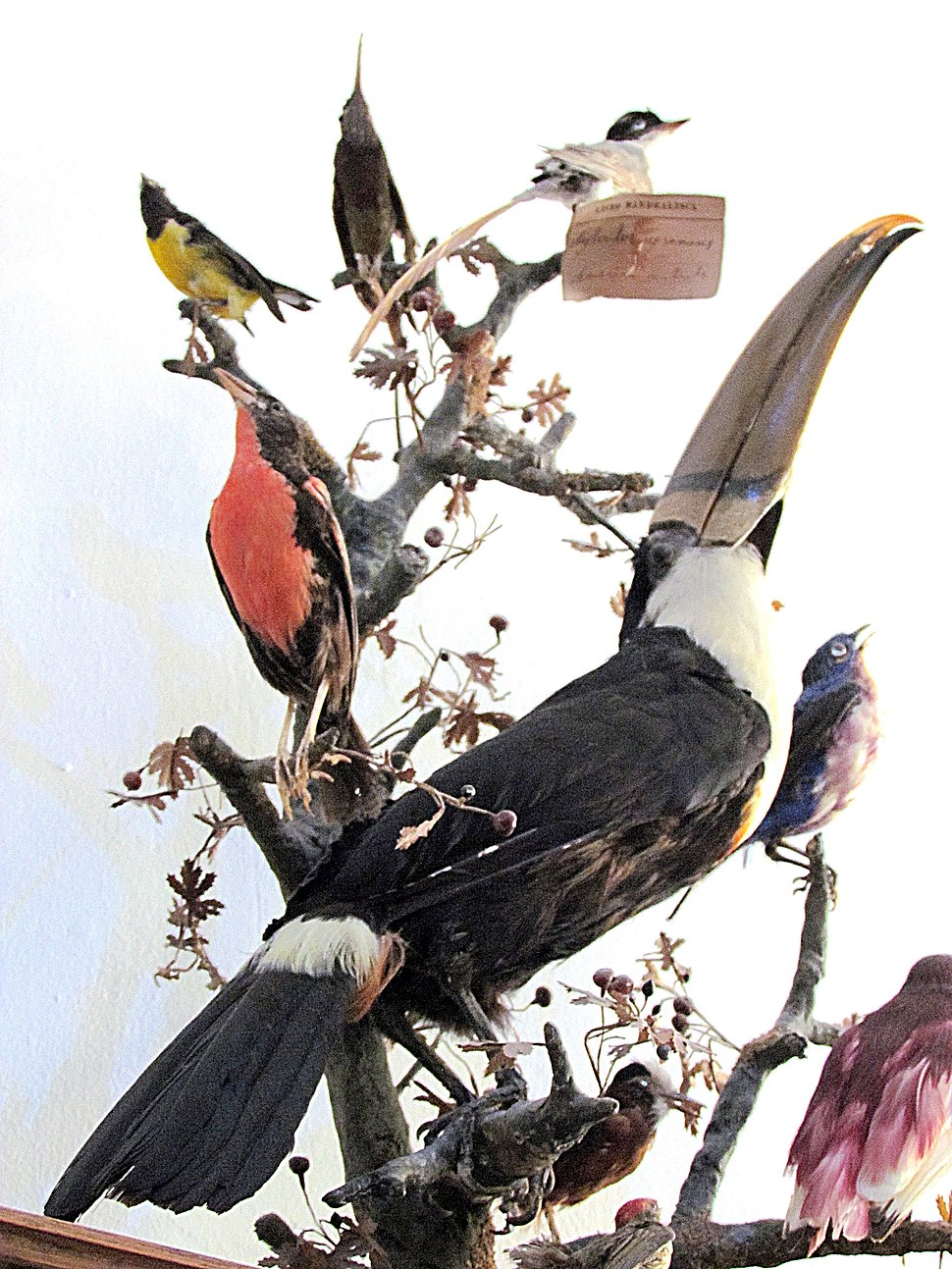 Ornitologija