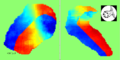 Otolith excitation patterns.png