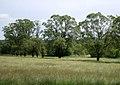 Oud-Heverlee Reservaat, De dode Beemden - panoramio.jpg