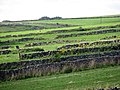 Over Haddon, stone walls, small fields - geograph.org.uk - 1454589.jpg