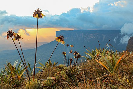 Tepui shrublands is an ecosystem that is considered almost endemic to Venezuela and currently classified Least Concern (LC) according to the IUCN Red List of Ecosystems. Por do sol no Monte Roraima.jpg