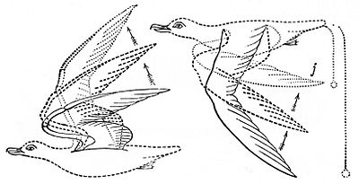 PSM V04 D556 Gulls flying.jpg