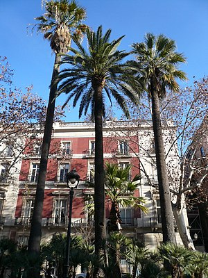 Plaça del Duc de Medinaceli - Palm trees (Washingtonia filifera and Phoenix dactylifera) in Plaça del Duc de Medinaceli.