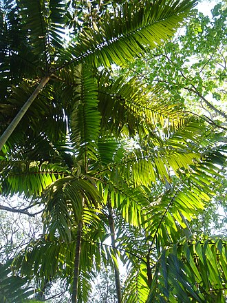 The Palmetum, Townsville - Canopy, The Palmetum