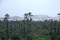 Palmiers de Marrakech.jpg