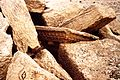 Palmira. T. funerario in rovina - DecArch - 1-149.jpg