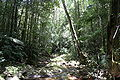 Paluma-range-national-park-north-queensland-australia.jpg