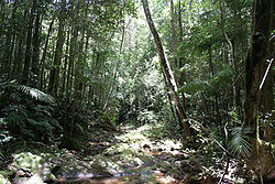 Paluma range australia s southernmost tropical rainforest