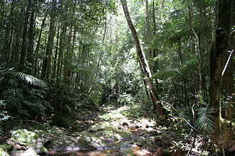 Paluma Range National Park - Image: Paluma range national park north queensland australia