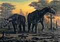 Paraceratherium transouralicum.jpg