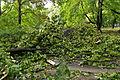 Park Sienkiewicza in Łódź after storm on July 20th, 2011, 05.jpg