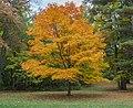 Parque Estatal Brown County, Indiana, Estados Unidos, 2012-10-14, DD 13.jpg